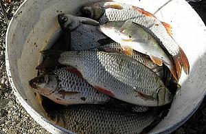 Sezon wêdkarski rozpoczêty. Gdzie na ryby w okolicy?