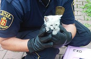 Uratowali kotka, który wpad³ do studzienki