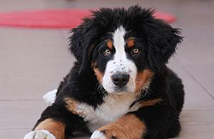 Psy z Bródna i Bia³o³êki oszalej± z rado¶ci. Powstanie park dla czworonogów