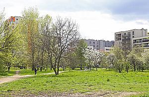 W centrum Odolan wyro¶nie zielony labirynt