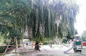 """Okaza³e drzewo przy Arki Bo¿ka do ¶ciêcia. """"Spó³dzielnia idzie na ³atwiznê"""""""