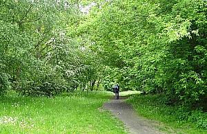 Park Anieli Krzywoñ prawie uratowany