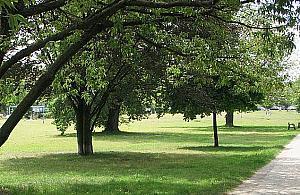 Gra o tysi�ce drzew. Szukamy miejsc na nasadzenia