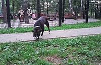 Komu przeszkadza wybieg dla ps�w? Sp�r na Tarchominie