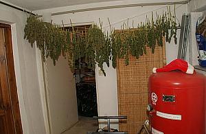 Trzysta krzewów w mieszkaniu. Domowi ogrodnicy za kratkami