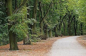 """1500 drzew na M³ocinach pod topór? """"Du¿e wyzwania przed nami"""""""