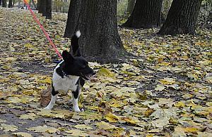 Gwo¼dzie ukryte w miêsie. Pu³apka na psy w parku