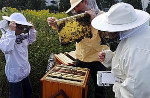 Niech ¿yj± pszczo³y! Rodzinne spotkanie na Bia³o³êce