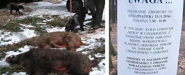 """Krwawe ³owy w Choszczówce. """"Nie informowali o polowaniu"""""""