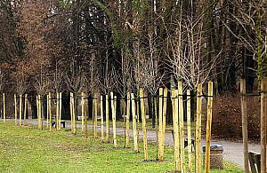 Wiêcej drzew, wiêcej tlenu