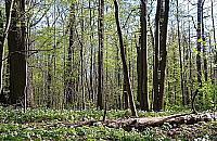 Obwodnica czy las? Budowa S2 opó¼niona