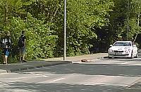 Nowodwory: sarna potr±cona przez samochód