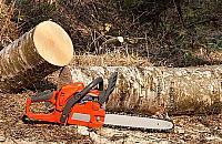 Nowe zasady wycinki drzew. Znowu zmiany w prawie
