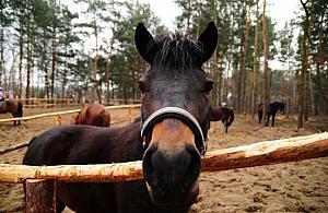 Dni Huculskie. ¦wiêto mi³o¶ników koni