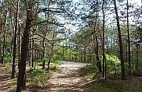 Góra Lotnika. Tragiczna historia ukryta w sosnowych lasach