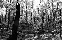 W Lesie Bielañskim znaleziono cia³o kobiety