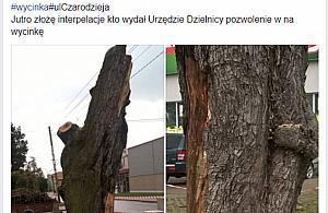 """""""Wycinaj± drzewa!"""". Polityczna gra na emocjach"""