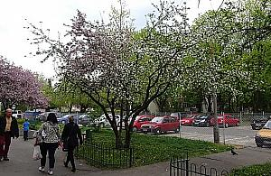"""""""Targówek p³ucem Warszawy"""". Pomys³ na setki drzew"""