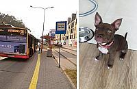 Kierowca autobusu wezwa³ policjê do szczeniaka