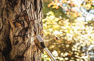 """""""Moje drzewo, moja sprawa. Szyszko, wróæ! [LIST]"""