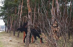 £o¶ w lesie - straszy czy u¶wiadamia? Zatrwa¿aj±ce statystyki