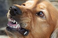 Pies zaatakowa³ stra¿nika miejskiego. Interwencja na Bródnie