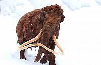 Mamy tu mamuta. Odkrycie na budowie metra
