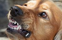 5 tysiêcy z³otych a nawet wiêzienie za nieupilnowanie psa