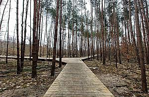 Las na Utracie w trakcie metamorfozy