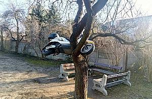 Motodrzewo z Targ�wka. Nowy rekord wandalizmu