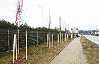 Idzie wiosna. 170 drzew na pocz±tek