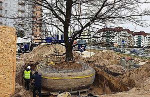 Operacja D�b na Tarchominie. Przesadzili wielkie drzewo