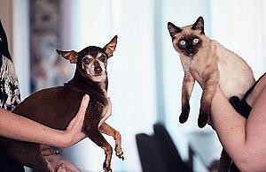 Bezp³atnie dla psów i kotów. Chipowanie i sterylizacja