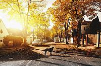 """Zagin±³ pies lub kot? Szukaj na """"Zwierzêta z gminy Nadarzyn"""""""