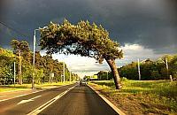 Kilkaset drzew uratowanych. Czy s�ynna sosna przetrwa?