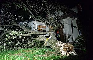 Drzewo run�o na dom. �miertelnie gro�na sytuacja