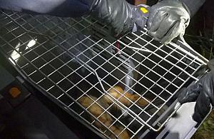Pies zaatakowa� w�a�cicieli. Dwie osoby ranne