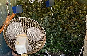 Plantacja marihuany na Bia�o��ce. Domowy biznes niedosz�ego zi�cia