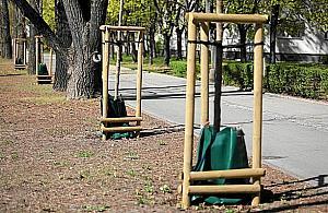 Worki na wod� dla... drzew. Pomys� dla Warszawy