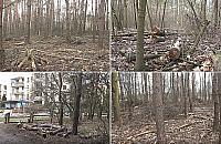 Wielka wycinka w Lesie Br�dnowskim. Co si� dzieje?