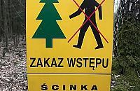 Tn� hektary Lasu M�ochowskiego. Zakaz wst�pu dla ludzi