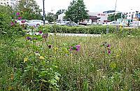 Legionowo w polnych kwiatach. ��ki zast�pi� trawniki