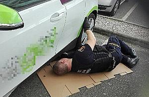 Strażnicy miejscy uratowali... kota. Maluch skrył się w samochodzie