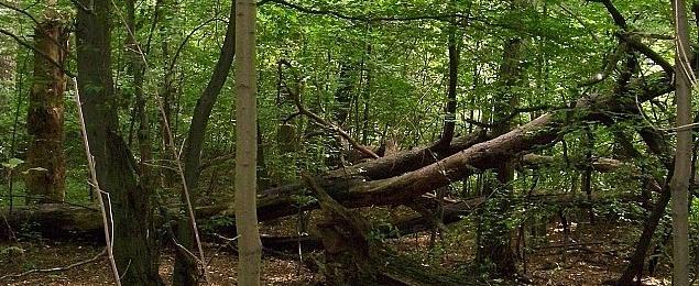 Samolot l�dowa� w lesie Bemowskim