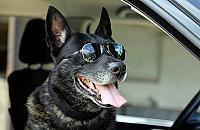 Najdzielniejszy pies Warszawy odchodzi na emerytur�