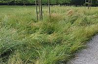 """Mieszkaniec: """"Kiedy� na trawie w parku mo�na by�o usi���, teraz tylko ogl�da�"""""""