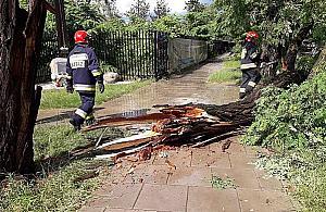 Burza w Warszawie. Powalone drzewa, utrudnienia