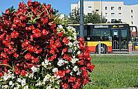 Warszawa ca�a w kwiatach. Tysi�ce ro�lin robi� wra�enie