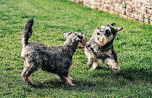 """Wybieg dla psów na skwerze """"Wiecha"""". """"Bêd± czystsze trawniki"""""""