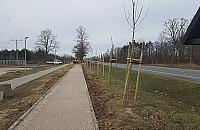 """Kilkaset drzew uschło. """"Sadzili nie zważając na teren i koszty"""""""